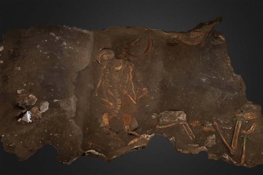 Restos de dos de los tres individuos enterrados en la sepultura de una rica familia cananea tal y como fueron descubiertos por los arqueólogos. (Adam Prins y Robert Homsher)