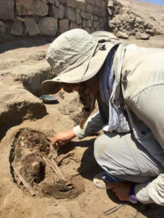 Se encontraron durante las excavaciones los restos de un perro, posiblemente sacrificado a los dioses. (© P. Eeckhout, ULB)