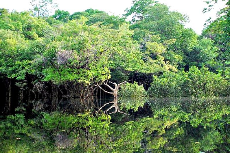 La desaparición a gran escala de los indígenas americanos, especialmente en la región amazónica, provocó que los bosques volvieran a crecer y a reabsorber carbón. Fotografía de la orilla del río Negro (Amazonas), al oeste de la ciudad de Manaos. (Public Domain)