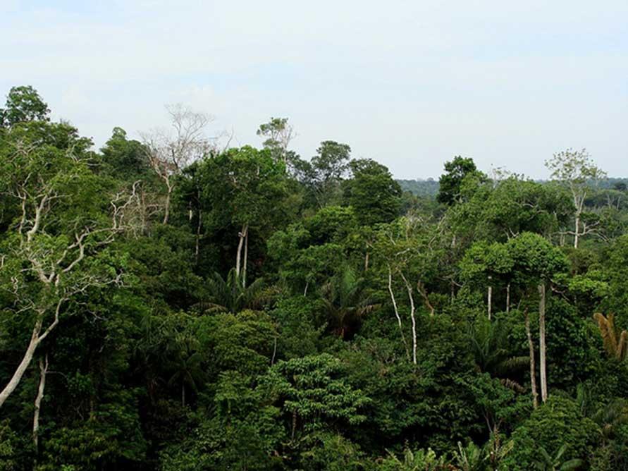 Selva amazónica, Brasil. (Ben Sutherland/Darren y Sandy Van Soye/CC BY NC SA 2.0)
