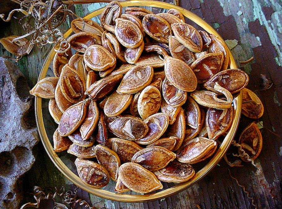 Semillas de calabaza Kabocha; son diferentes a las recuperadas recientemente por nativos americanos (Creative Commons/Flickr)