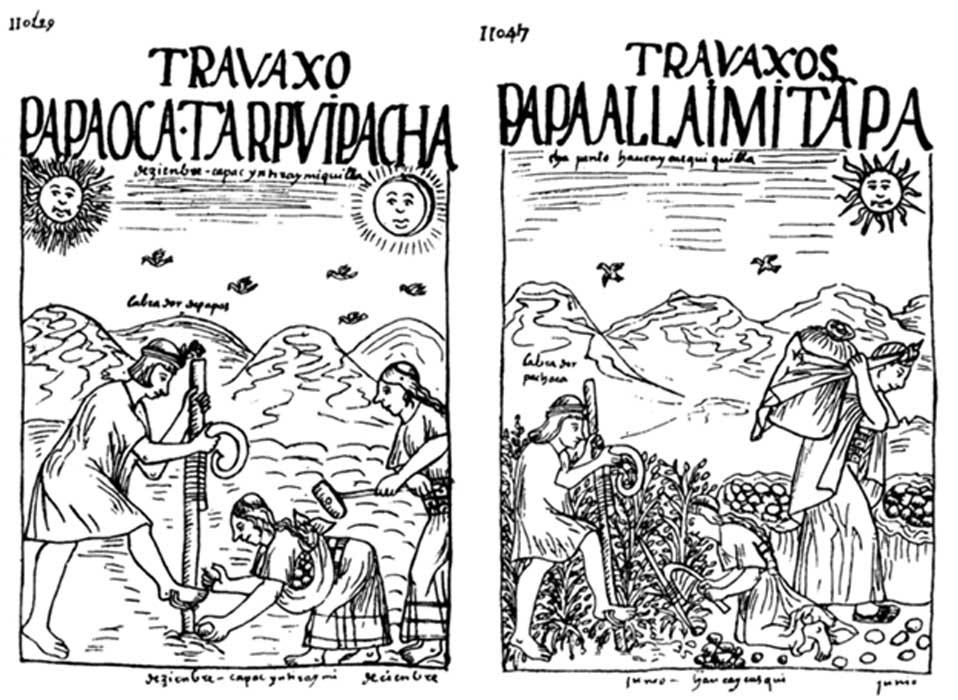 Dibujos de Guamán Poma de Ayala en los que podemos observar la siembra de patatas y otros tubérculos a la izquierda (Public Domain) y su recolección a la derecha. (Public Domain) Obsérvese la presencia de Inti y Mama Quilla en el primer dibujo, mientras que en el segundo únicamente aparece Inti.