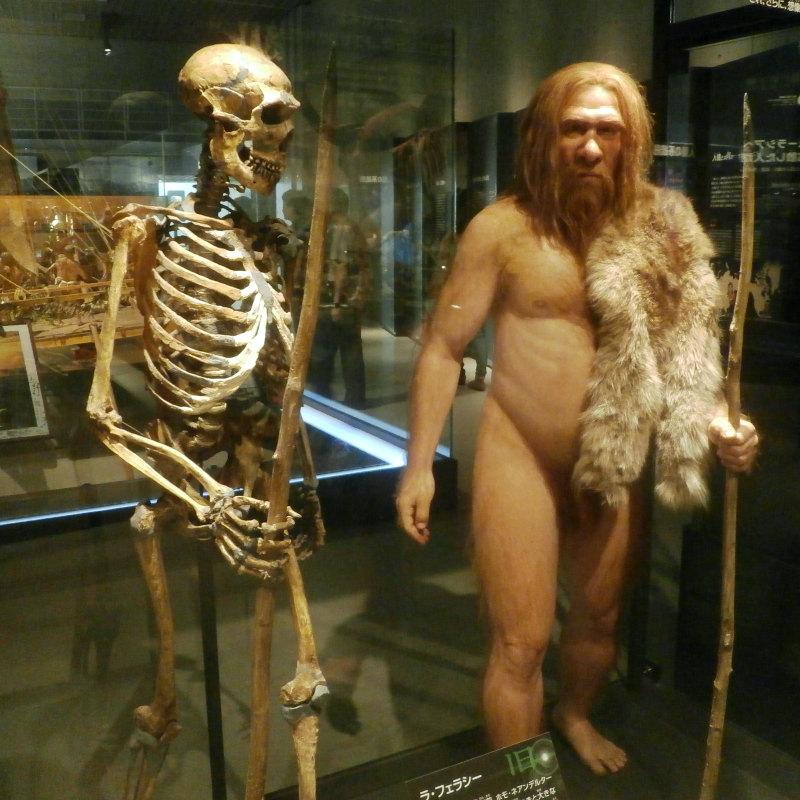 El reciente estudio apunta a la endogamia como posible causa de la extinción de los Neanderthal (Photaro - CC BY-SA 3.0)