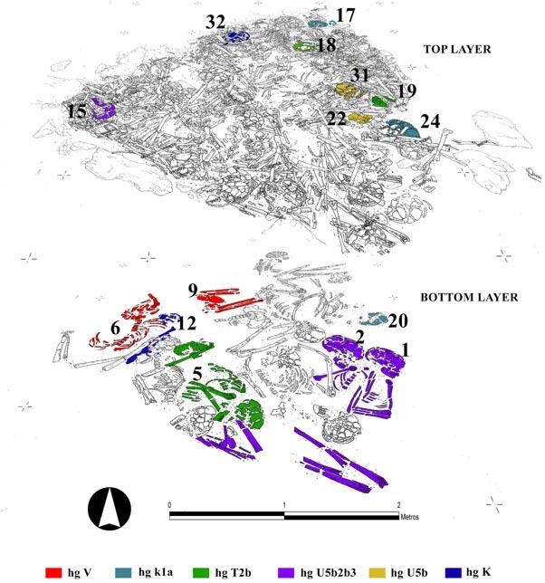 Superposición de los diferentes estratos del osario neolítico del Alto del Reinoso en el que se indican con diferentes colores los huesos de los individuos con un perfil genético similar. (Gráfico: Héctor Arcusa Magallón)