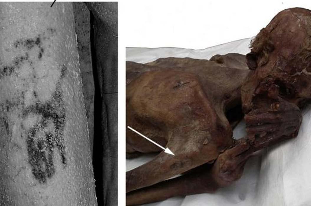Los investigadores encontraron las imágenes de un toro salvaje y un carnero de Berbería tatuadas sobre el brazo de una momia del antiguo Egipto. (Museo Británico)