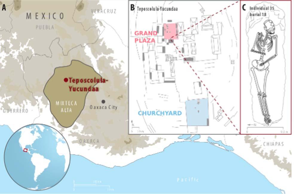 A) Localización del asentamiento de Teposcolula-Yucundaa en la región Mixteca Alta del estado de Oaxaca, México; B) Plano de la zona administrativa central de Teposcolula-Yucundaa en el que se pueden observar las posiciones relativas de la Gran Plaza y el cementerio. C) Dibujo del individuo 35 del cual se consiguió aislar el genoma de la Salmonela Paratífico C (muestra Tepos_35). (Archivos del proyecto arqueológico Teposcolula-Yucundaa - INAH)