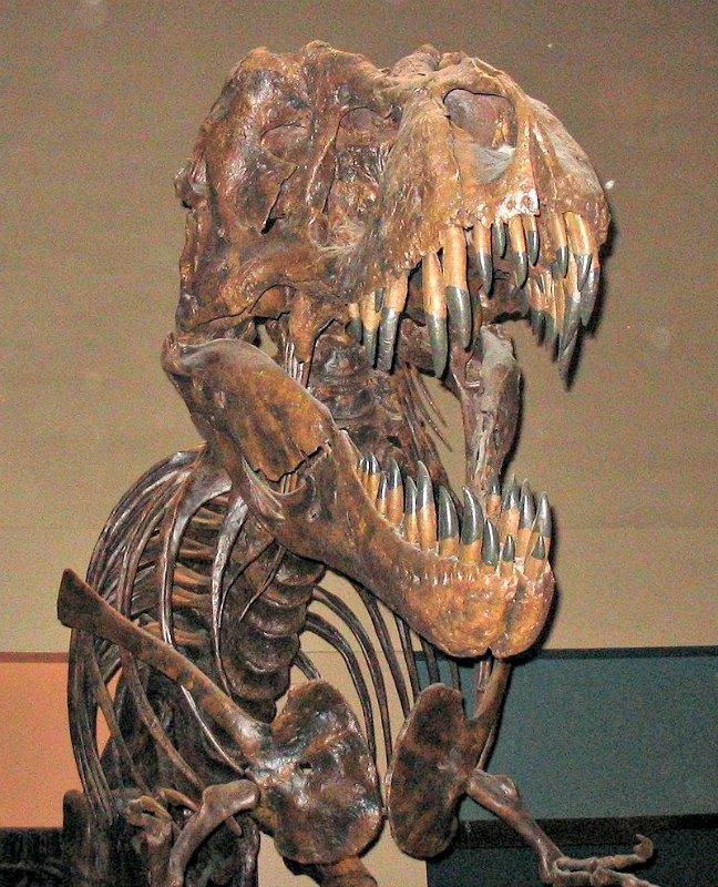 Esqueleto fósil de Tyrannosaurus rex expuesto en el Museo Nacional de Historia Natural del Instituto Smithsoniano de Washington DC. (Public Domain)