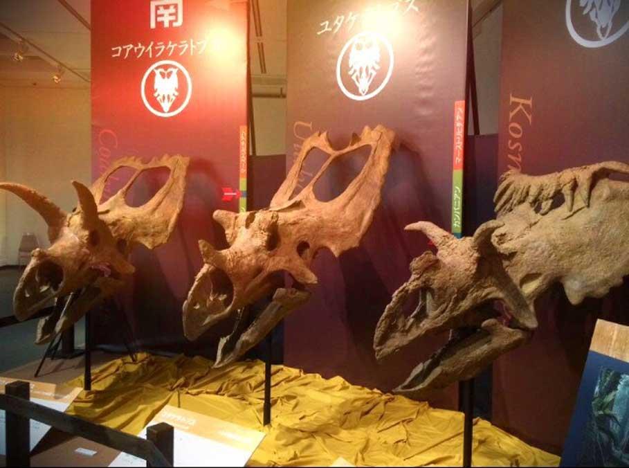 Estos tres cráneos de ceratops expuestos en un museo podrían muy bien haber sido tomados por restos de míticos dragones en la antigüedad (Legendz Collective)