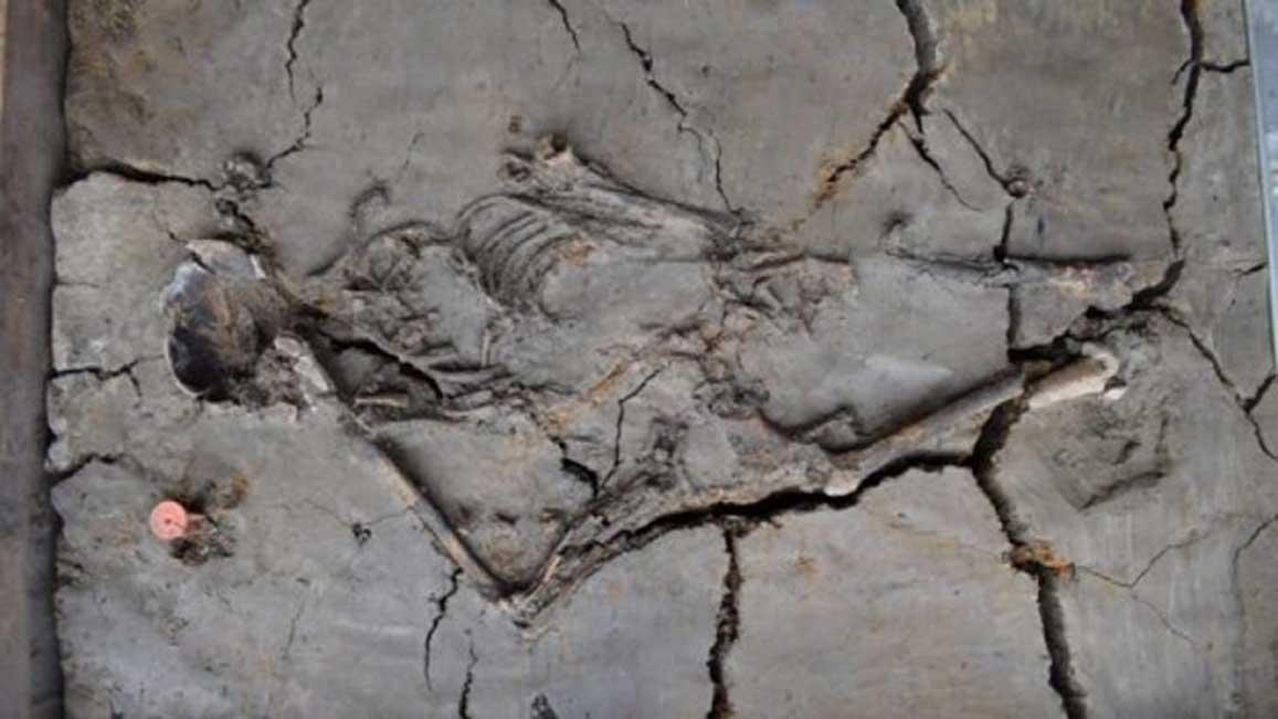 La antigua tumba de la mujer y el bebé descubierta en los Países Bajos data de la Edad de Piedra. (Gemeente Nieuwegein)