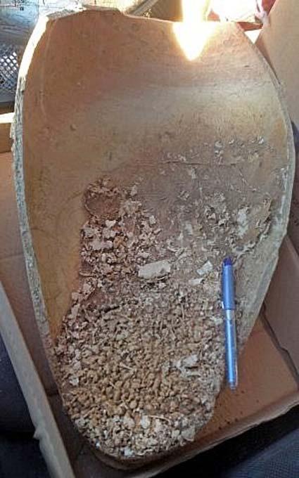 Vasija con restos de sapos hallada en un enterramiento cananeo cercano al Zoológico Bíblico de Jerusalén. (Zohar Turgeman-Yaffe, Autoridad de Antigüedades de Israel)