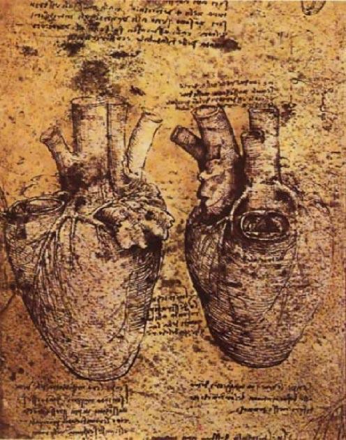 Un corazon Leonardo da Vinci quería saber cómo funciona el cuerpo. (Dominio público)
