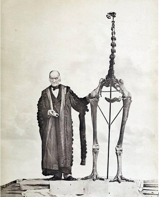 Sir Richard Owen de pie junto a un esqueleto de moa y sosteniendo el primer fragmento de hueso que pertenece a un moa jamás encontrado. (Wikimedia Common)