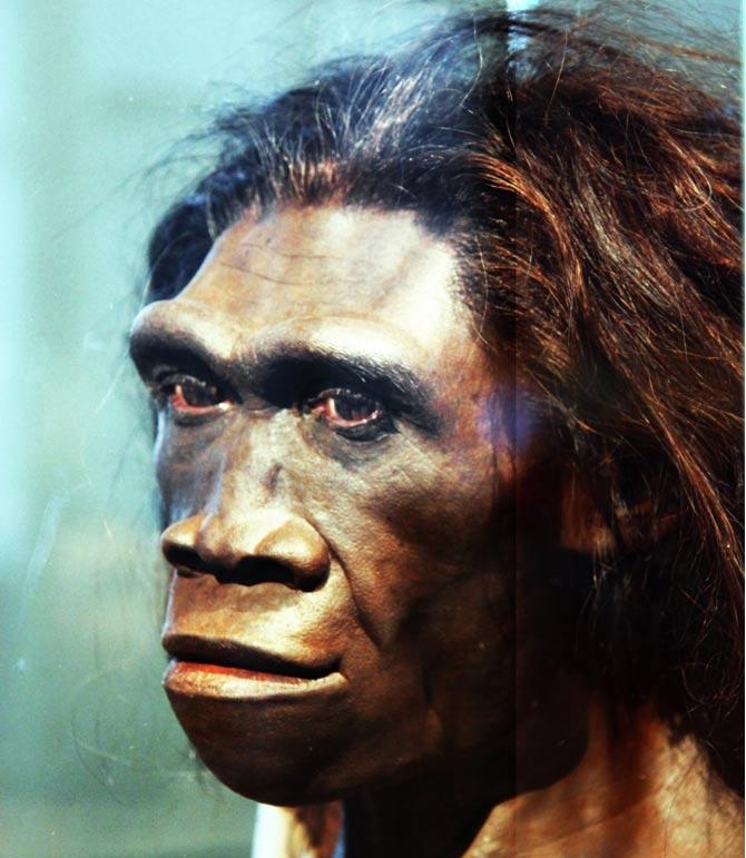 Modelo del rostro de una hembra adulta de Homo Erectus (CC BY 2.0)