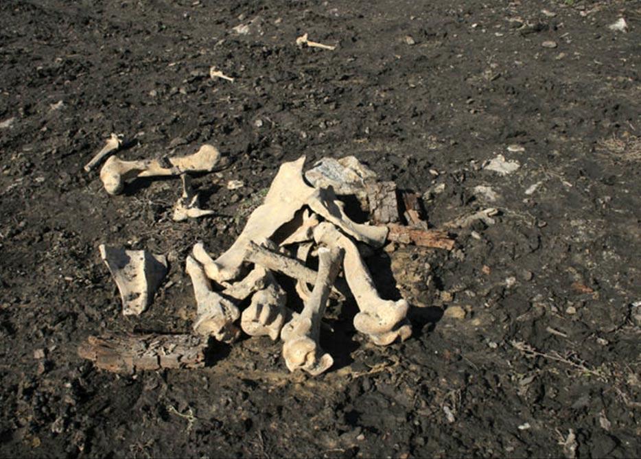 Los obreros destrozaron la antigua tumba cuando excavaban una zanja destinada a la colocación de una nueva canalización de agua cerca de la localidad de Bargash. Fotografías: Vasily Oinoshev