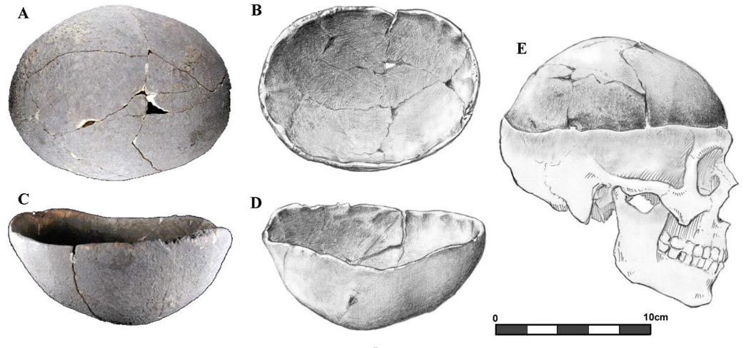 Dos de los cuerpos fueron enterrados junto con la parte superior de otros cráneos, debidamente seccionada (Imagen cortesía de Jelmer W. Eerkens)