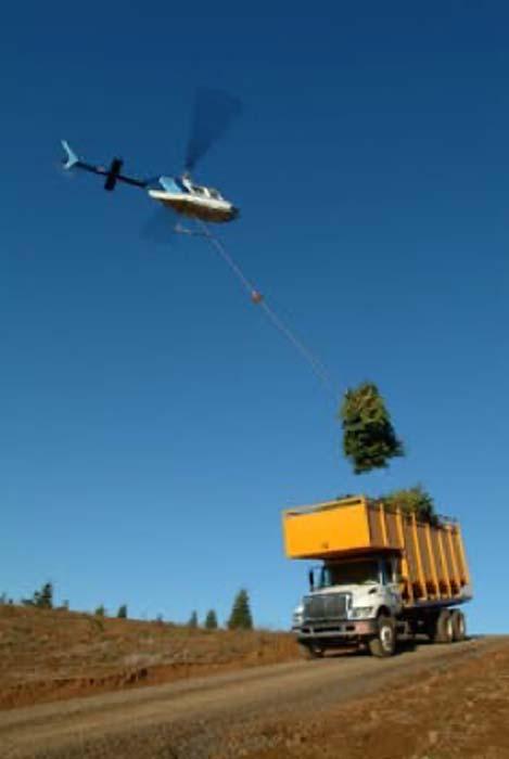 Helicóptero de elevación de abetos en camiones de transporte en Oregon. Noble Mountain Tree Farm