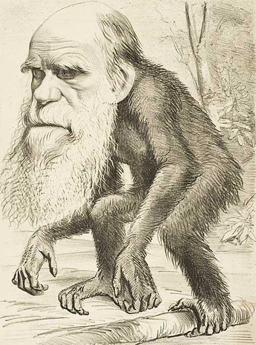 A medida que la evolución se hizo ampliamente aceptada en la década de 1870, las caricaturas de Charles Darwin con un cuerpo de mono simbolizaban la evolución. (Dominio público)