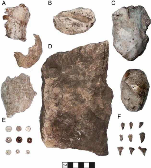 Se encontraron numerosas cuentas hechas de conchas y algunas de las herramientas que se usaron en su fabricación durante las excavaciones de prueba. (Barbour et al)