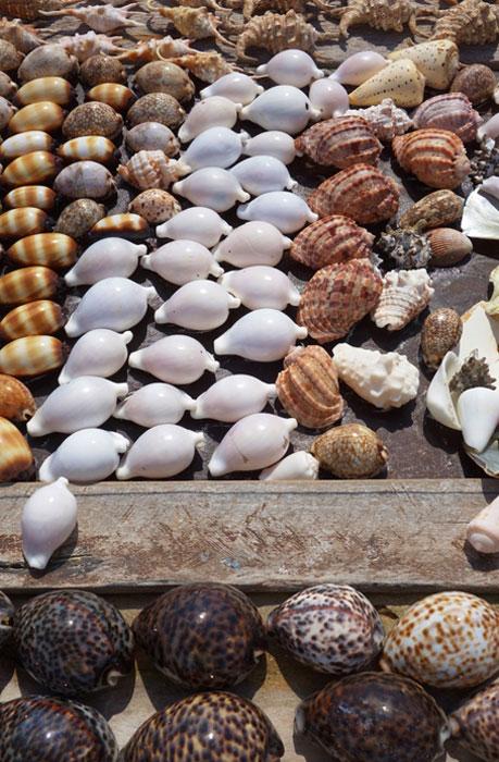 Las conchas de vaqueros, que se utilizan como dinero de la cáscara, se recogen y se ponen a secar. (eqroy / Adobe)