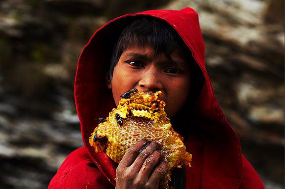 Disfrutando del fruto de la labor de los cazadores de miel. Fotografía: Andrew Newey