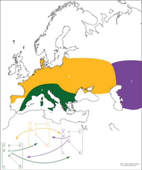 Distribución espacial y ubicación de las 3 subpoblaciones neandertales. Sur de Europa (etiquetado A en verde), Norte de Europa (etiquetado B en amarillo) y Europa del Este (etiquetado C en púrpura). El modelo demográfico completo que utilizamos para simular la dinámica de la población neandertal estaba compuesto por tres submodelos correspondientes a cada una de las subpoblaciones identificadas. Incluimos un parámetro de migración (señalado con ψ) para permitir que los individuos se muevan de una subpoblación a otra. (Degioanni / CC BY-SA 4.0)