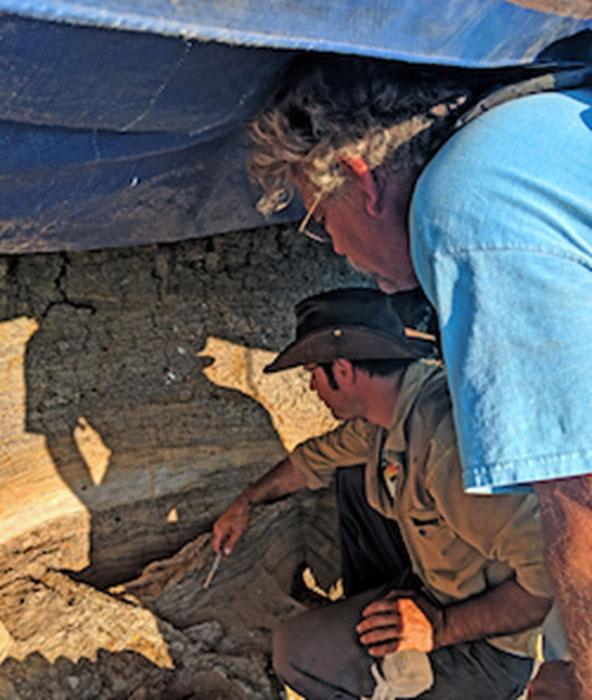 Es como un museo del fin del período Cretácico, en una capa de un metro y medio de espesor, en el sitio de fósiles de impacto de meteoros. (Robert DePalma / La Universidad de Kansas)