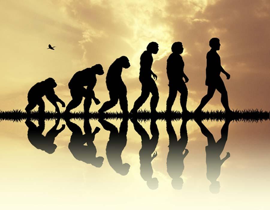 La evolución incluye muchas especies humanas ahora extintas. Fuente: adrenalinapura / Adobe