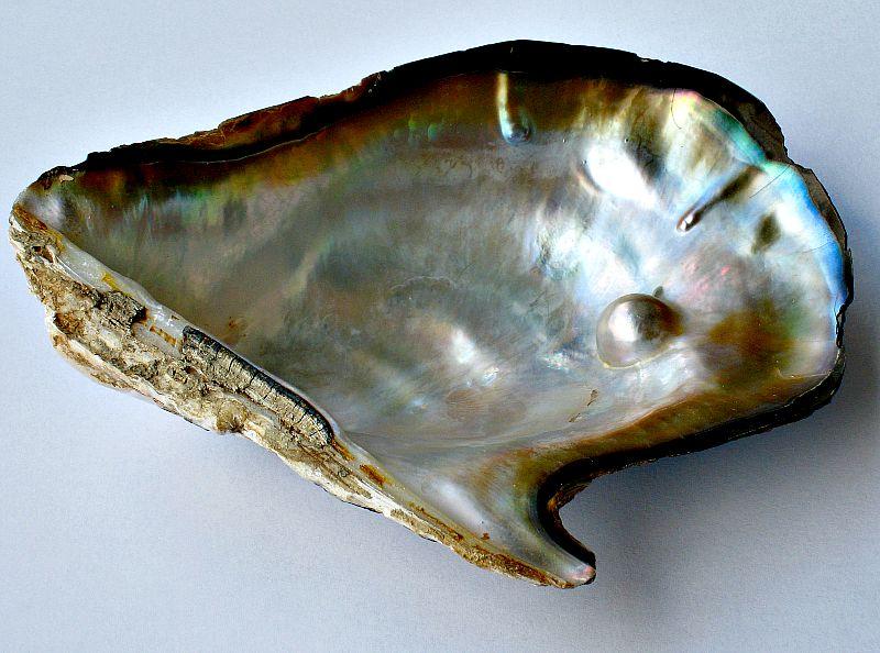 Fotografía de perla natural similar a las recogidas en la isla de Cubagua, Venezuela.(Wikimedia Commons)