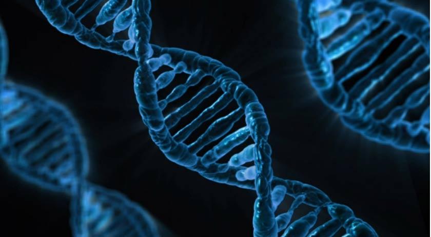 Portada-ADN humano (Public Domain)