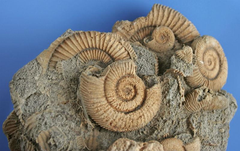 Imagen de portada: Fósiles de Ammonites (Wikimedia Commons)