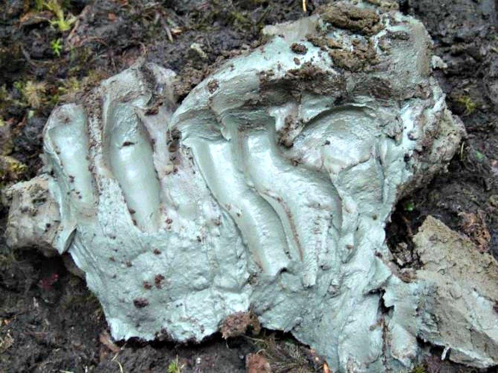 Portada-Fotografía de la arcilla bactericida, usada como remedio ancestral por los nativos norteamericanos de la nación Heiltsuk. (Noticias de la Ciencia/Kisameet Glacial Clay Inc.)