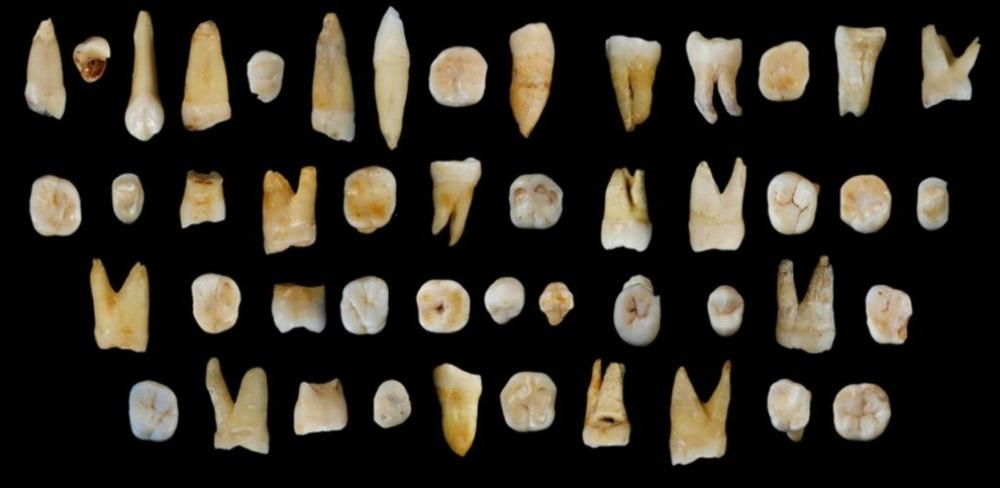 Portada-Piezas dentales halladas en la cueva de Fuyan, ubicada al sur de China, en Daoxian, provincia de Hunan. (S.Xing/X-J.Wu/El Mundo)