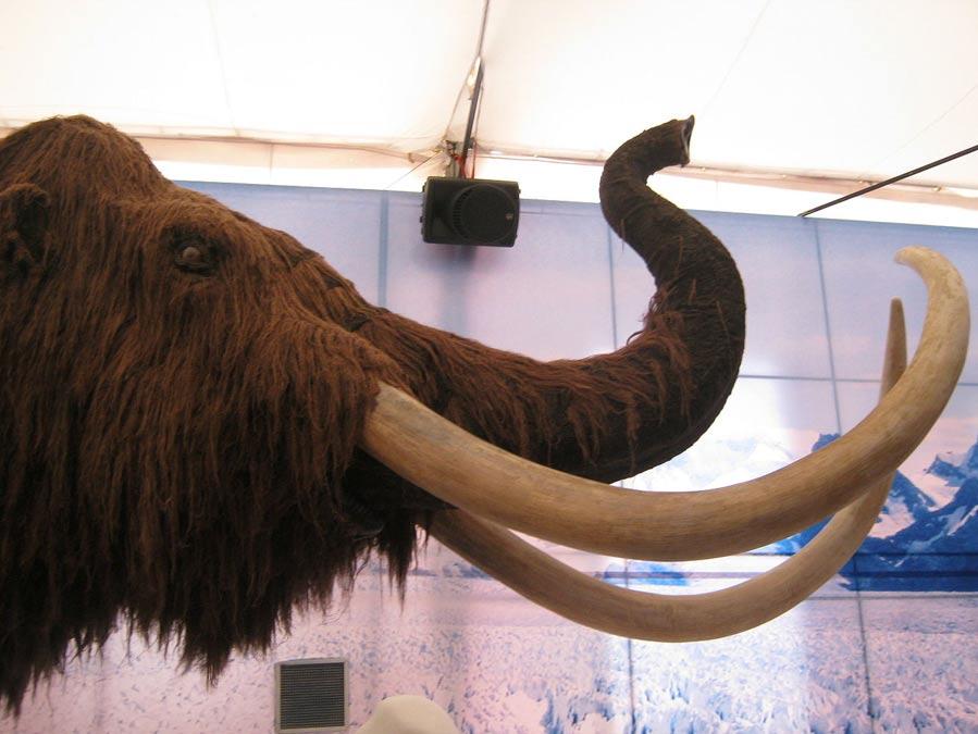 Portada-Reproducción de un mamut lanudo; el ejemplar con el que se enfrentaron los cazadores siberianos hace 45.000 años debió de ser imponente. (Juan Velasco/CC BY SA 4.0)