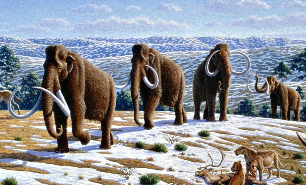 Portada - Manada de mamuts lanudos (Mammuthus primigenius) en un paisaje del Pleistoceno Superior del norte de España. (Mauricio Antón/CC BY-SA 2.5)