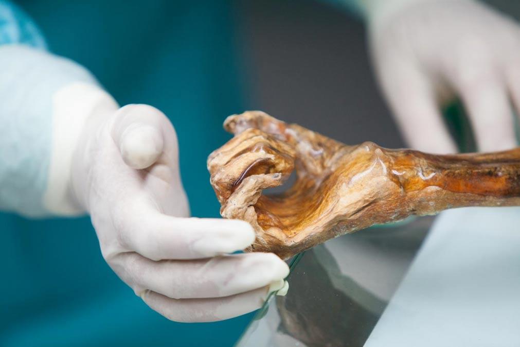 Portada-Mano del 'Hombre de Hielo'. Fuente: South Tyrol Museum of Archaeology/EURAC/M.Lafogler