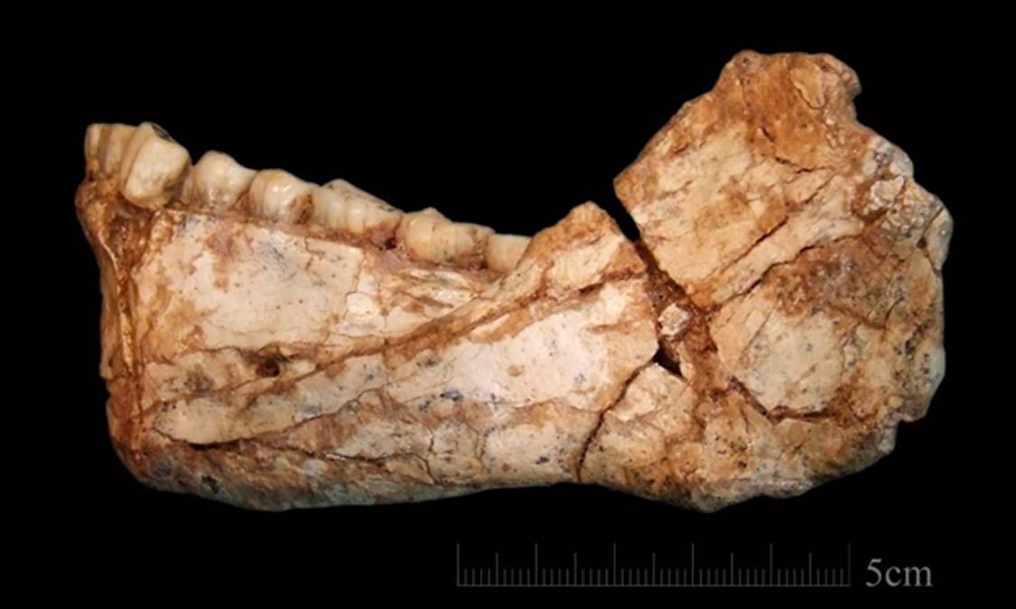 Portada - Mandíbula adulta casi completa hallada en Jebel Irhoud, Marruecos. Nuevos descubrimientos realizados en este yacimiento datan la antigüedad de este ejemplar de Homo sapiens en 300.000 años. Fotografía: Jean-Jacques Hublin/Instituto Max Planck de Antropología Evolutiva, Leipzig