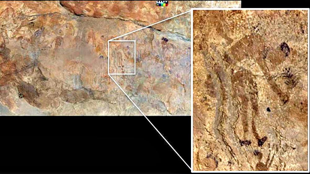 Portada - Pintura rupestre en la que podemos observar una figura humana recogiendo plantas. (Fotografía: RTVE/EFE/The Archaeological Mission in the Sahara, Universidad de Roma 'La Sapienza')