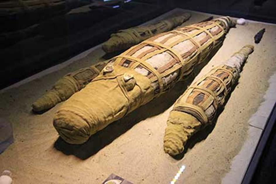 Portada - Momias de cocodrilos del Templo de Kom Ombo. (Michael Birrell/ B.C. Archaeology)