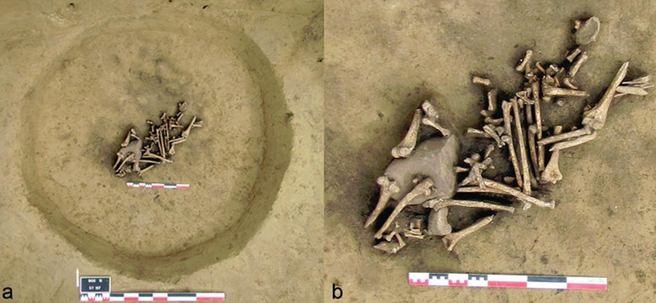 Portada-Fosa con huesos de los brazos mutilados (Fotografía: Antiquity)