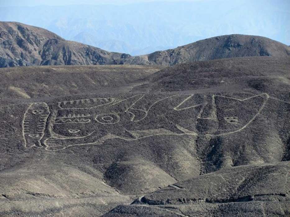 Portada - El geoglifo de la orca, redescubierto recientemente, se encuentra en la ladera de una colina desértica situada en la remota región de Palpa del sur del Perú. (Imagen: Johny Isla)
