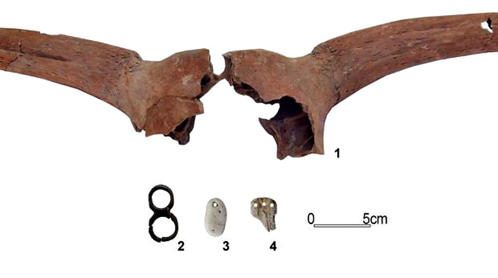 Portada - Joyas neolíticas y cuernos de animales recuperados recientemente en el yacimiento de La Draga cercano al lago de Bañolas, España. (Fotografía: ABC/UAB/CSIC)