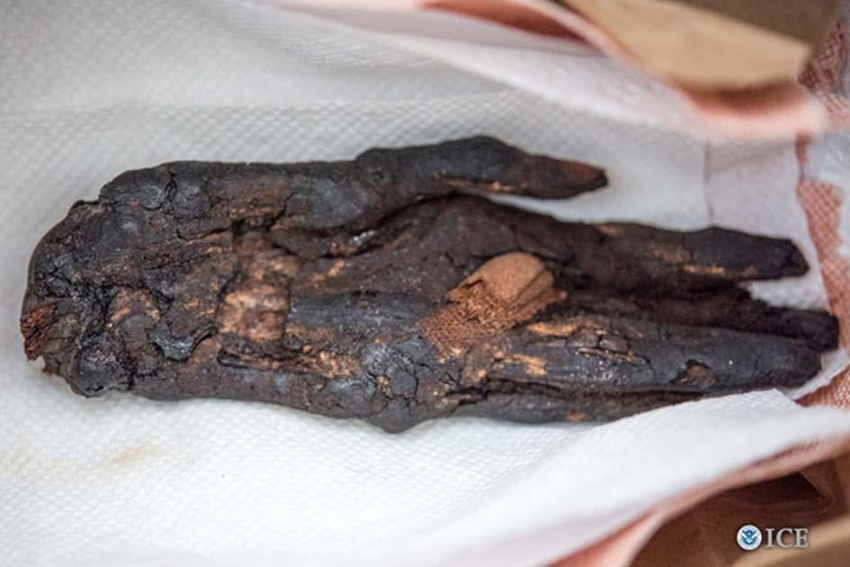 Portada - La mano momificada recientemente devuelta a Egipto. (Fotografía: John Denmark / U.S. Immigration and Customs Enforcement)