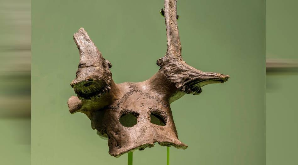 Portada - Una de las tres máscaras mesolíticas de cráneo de ciervo pertenecientes a la nueva exposición sobre Star Carr del Museo de Arqueología y Antropología de Cambridge. Fuente: Josh Murfitt / MAA