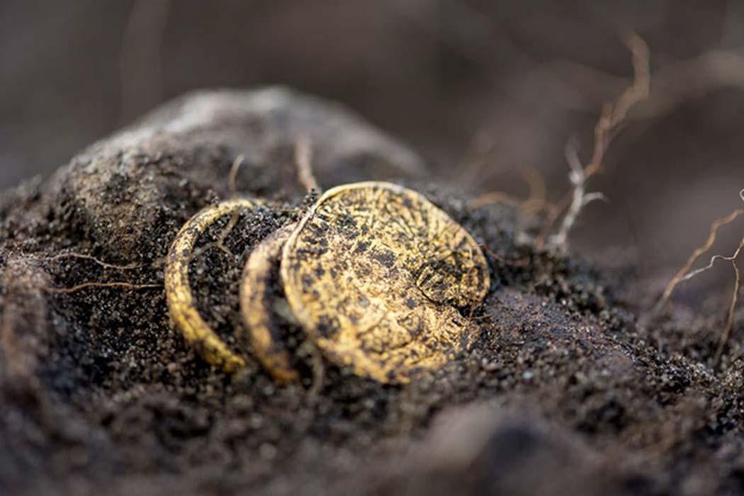 Portada - Moneda de oro y anillos del mismo material recientemente descubiertos en Sandby Borg. Fotografía: Daniel Lindskog/ Sandby Borg