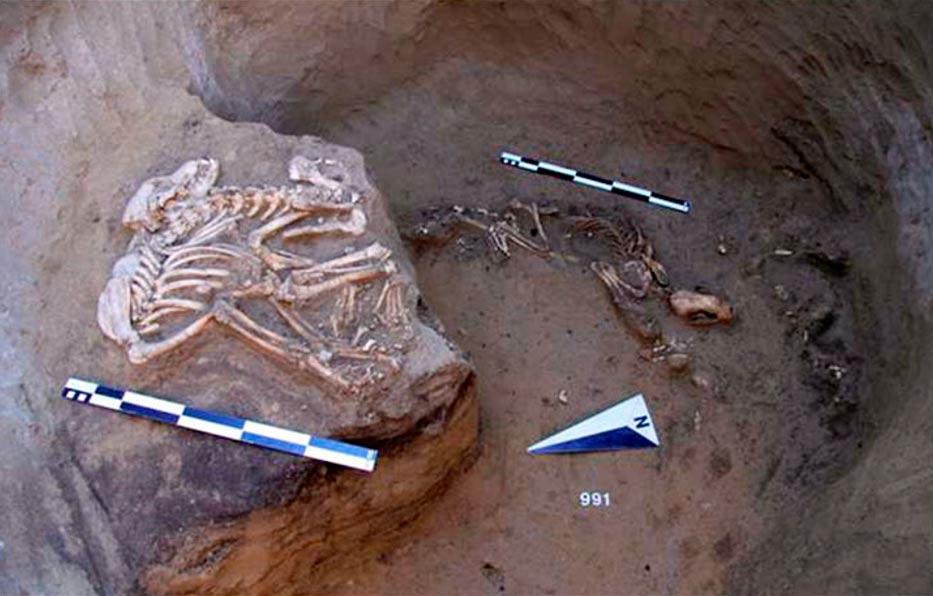 Portada-Más difícil de entender para los arqueólogos han sido los restos de animales hallados en los fosos. Fotografía: Instituto de Arqueología y Etnografía, departamento siberiano de la Academia de Ciencias de Rusia.