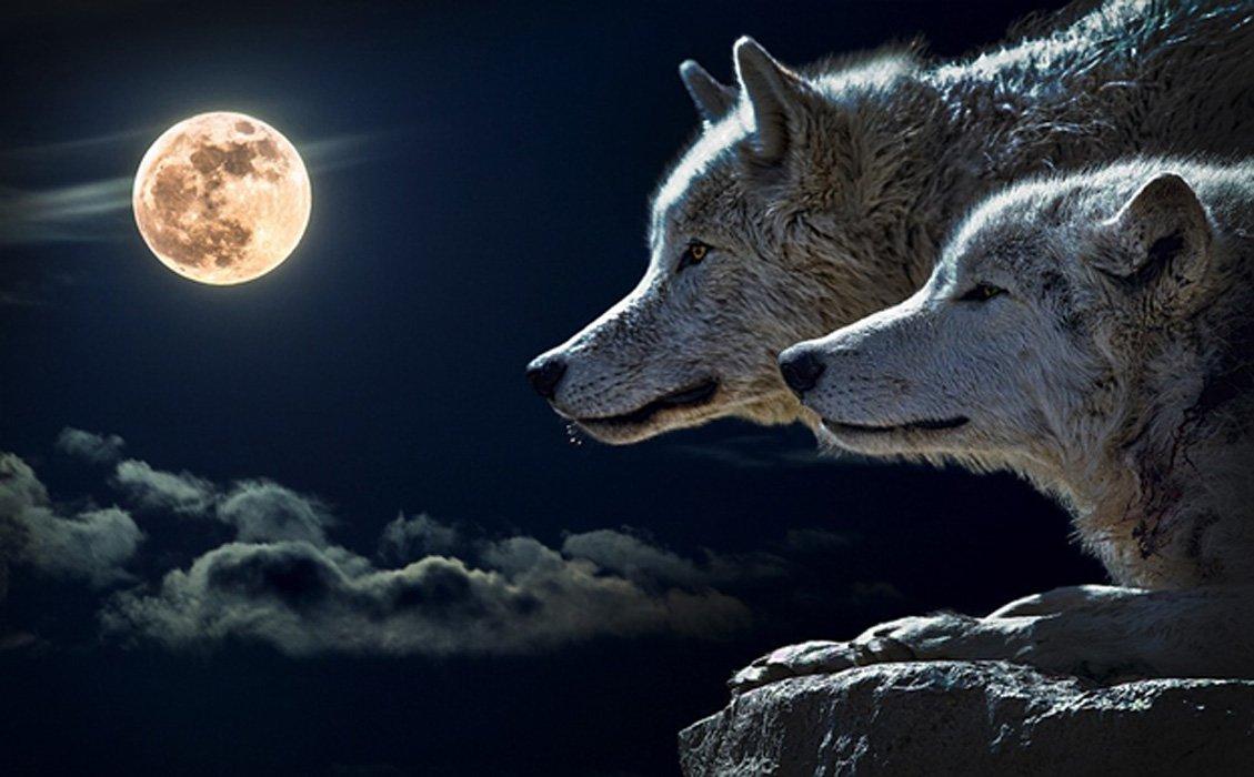 Portada - Perros / lobos y luna llena (Dominio público)