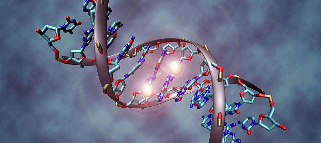 Una molécula de ADN metilada en las dos hebras de su citosina central. (C. Bock/Wikimedia Commons)
