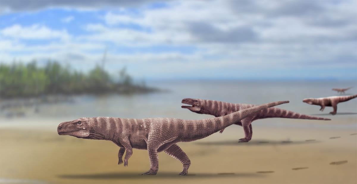 Reconstrucción de Batrachopus trackmaker de la Formación Jinju del Cretácico Inferior de Corea del Sur, un antiguo cocodrilo bípedo. Fuente: Anthony Romilio, Universidad de Queensland / Nature