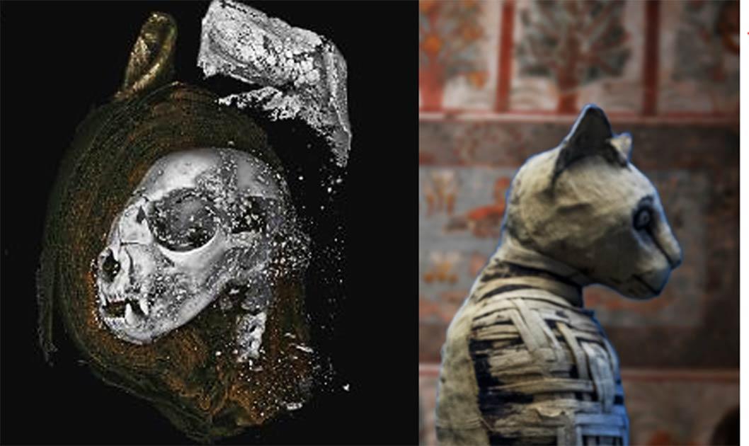 una de las momias de animales del antiguo Egipto (Andrea Izzotti / Adobe Stock) escaneada en el estudio era un gato. (Nature)
