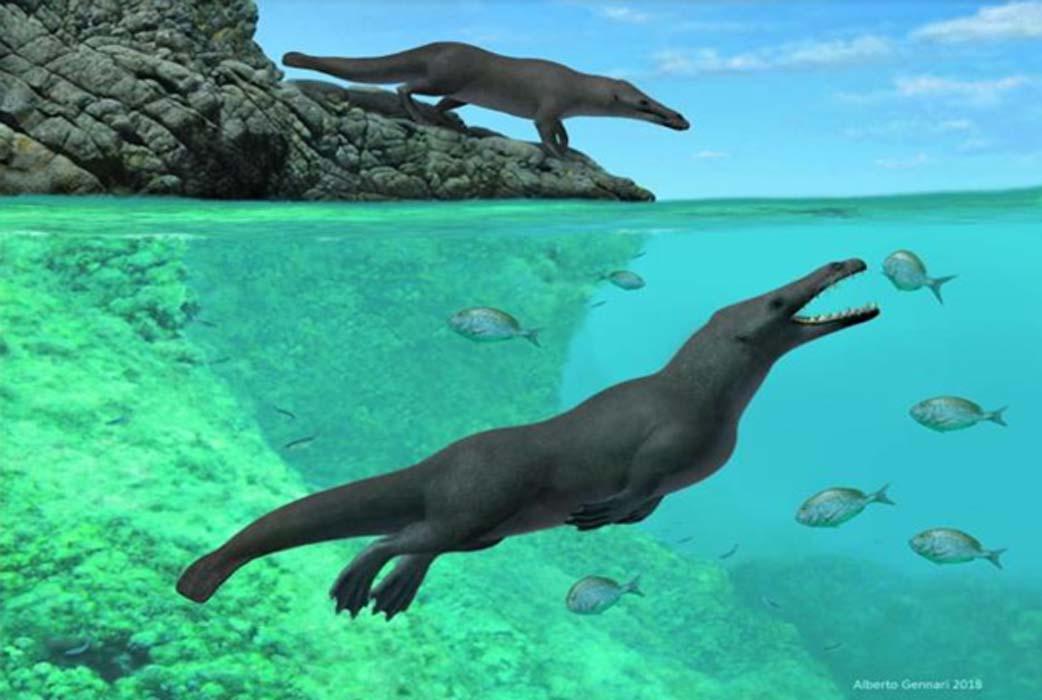 Cómo era Peregocetus, la ballena antigua con patas.